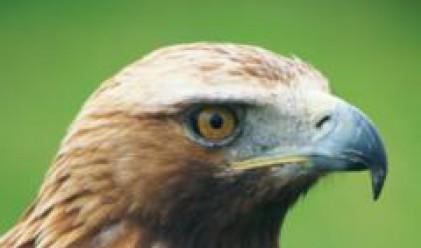 Спешни мерки за опазването на световно застрашения Царски орел