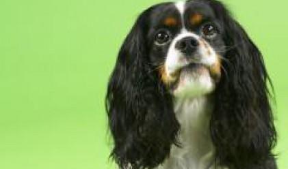 В Тайланд застраховат и кучета
