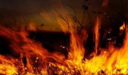 Изгоряха 10 дка лозя край Враца, загубите надхвърлят 100 хил. лв.