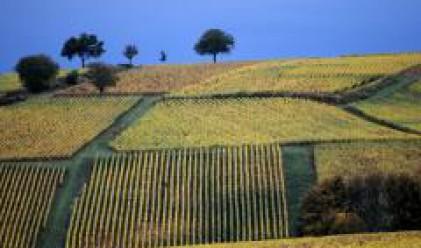 Приходите от земеделие в Европа са се увеличили с 5.4% през 2007 г.