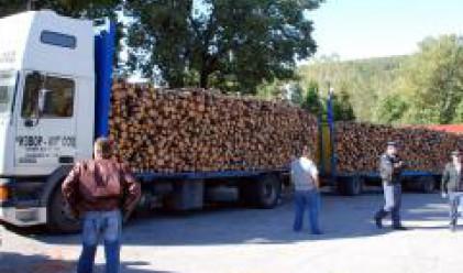 Около 14 млн. куб м дървесина се добиват годишно у нас