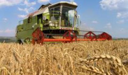 Стартовата цена на пшеницата по-ниска от 2007 г.