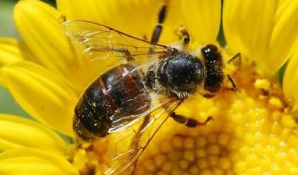 Китайци лекуват с ужилване от пчели