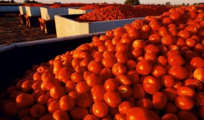 Рязко поскъпват доматите