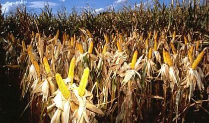 Брюксел: България не прилага правилно директивата на ГМО