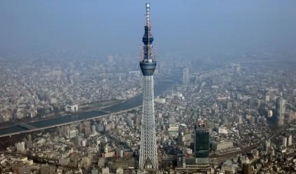 Японско дърво с височина 634 метра