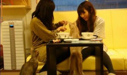 С кафето: Да се насладиш и на... котешко мъркане