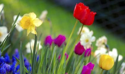 Настъпва астрономическата пролет