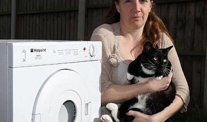 Котка оцеля след 40 минути в сушилнята