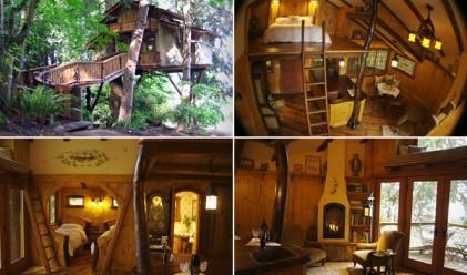 Къщи на дърво, и то луксозни