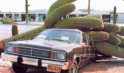 Най-странните причини за автомобилни повреди
