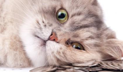 Имоти,сметки и личен шофьор: Как живеят най-богатите животни на планетата