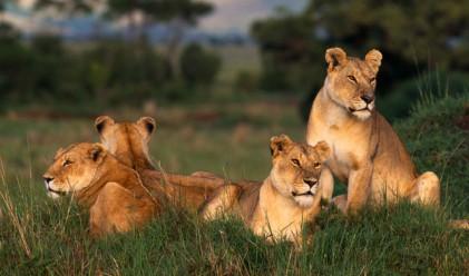 Серенгети сафари: с кон и джип по следите на хищници