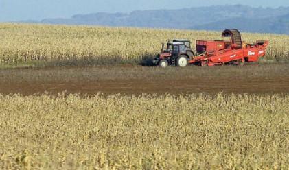 Сушата съсипва пшеницата, 34 страни ще гладуват
