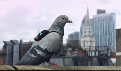 Лондон следи нивото на замърсяване на въздуха с гълъби