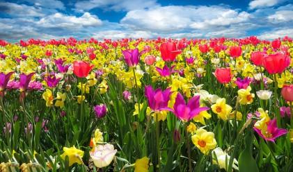Пролетта дойде!