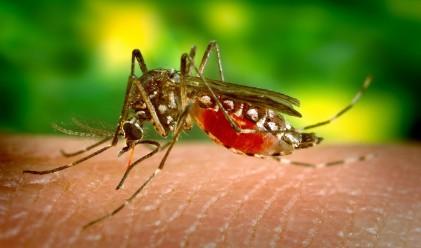 Знаете ли защо комарите хапят някои хора повече от останалите?