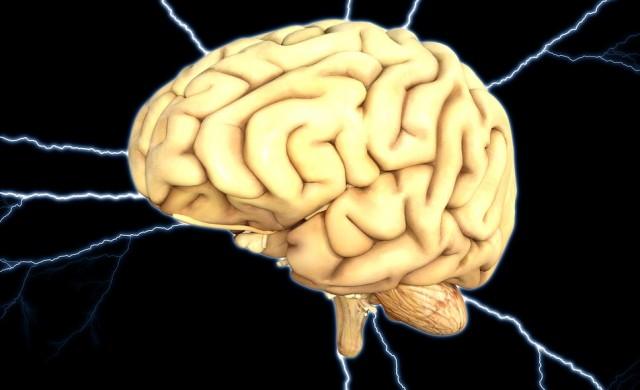 Колко дълго живее мозъкът след смъртта на тялото ни?