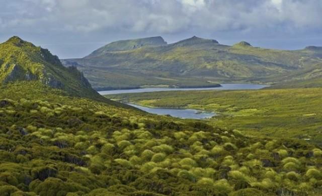 Остров Кембъл - домът на най-самотното дърво на планетата