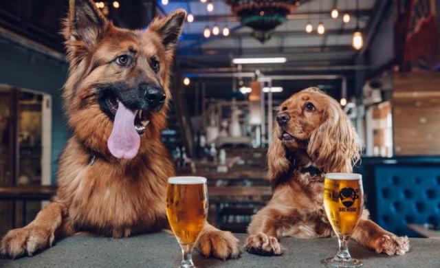 Отпуск, ако си вземеш кученце