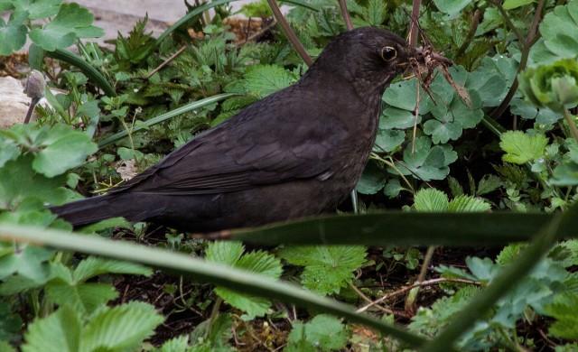 Птиците изчезват заради глобалния икономически растеж