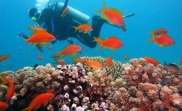 Откриха коралов риф край бреговете на Италия