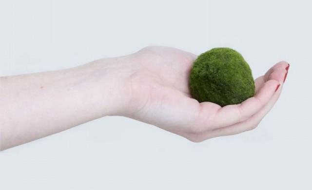 Тази малка зелена топка е най-модерният домашен любимец
