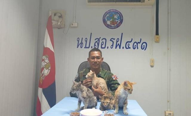 Военноморските сили на Тайланд спасиха четири котки от горящ кораб