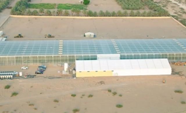 Компания, която отглежда храна в пустинята, набра $60 млн. финансиране