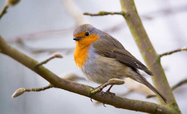 Чуваш птичи песни? Това ти носи толкова щастие, колкото бонус към заплатата