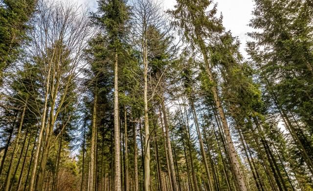 Кои са държавите в Европа с най-много гори?