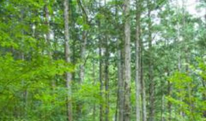 Общата горска площ на България е 4.1 млн. хектрара, 3.4 млн. от тях покрити с гори