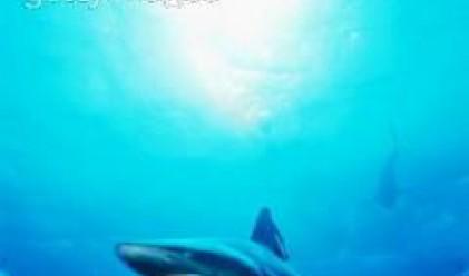 Рекорден улов на акули край Несебър