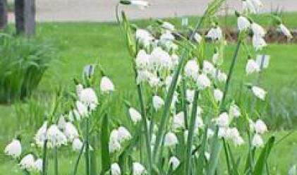 Експерти от РИОСВ проверяват състоянието на естествените находища на блатно кокиче