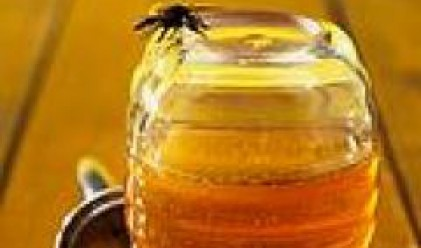 Създават клъстър за производство на мед и пчелни продукти