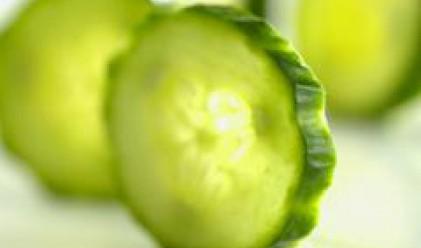 Краставичките могат да решат енергийните проблеми на човечеството