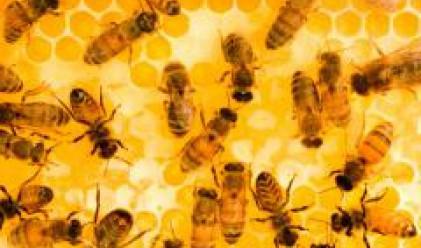 Усвоени са 50% от парите от Националната програма за пчеларство