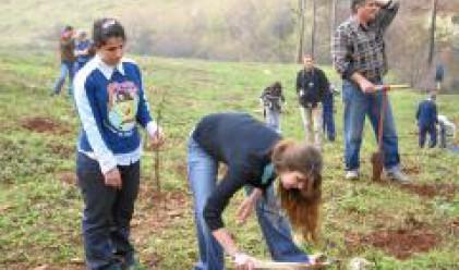 150 доброволци залесяваха гората край Стара Загора