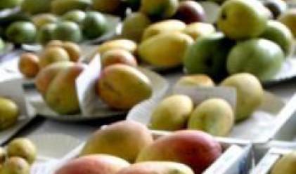 Два броя манго продадени на търг за 1250 евро