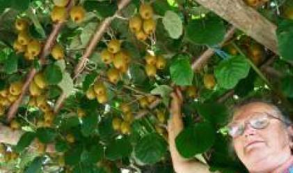 Испанските земеделци ще могат да наемат български и румънски работници