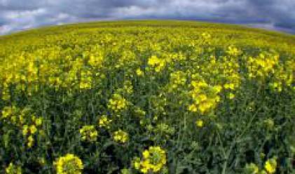Експерти предлагат спешни мерки по законодателството за продажбата на биогорива у нас