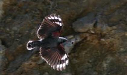 Специална площадка за наблюдение на редки птици в Триградските скали