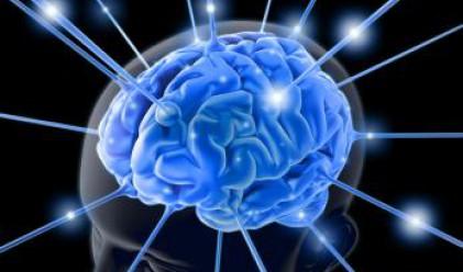 Любопитни факти за човешкия мозък