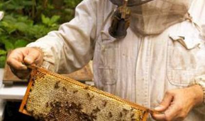 Пчеларството в България - на ръба на оцеляване