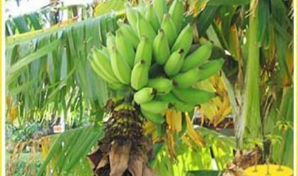 Еквадор променя търговията с банани
