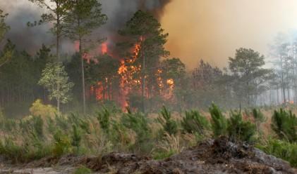 Изгоряха над 2 000 дка борова гора
