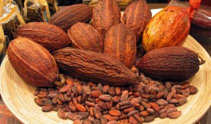Най-доброто какао в света