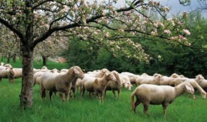 Фонд Земеделие започна изплащане на обезщетенията за шап
