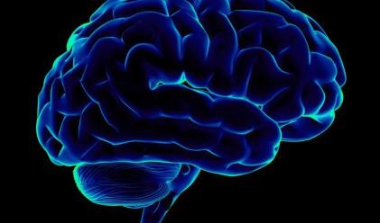 Как ни мами мозъкът-егоист?