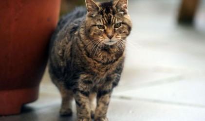 Котешки рекорди